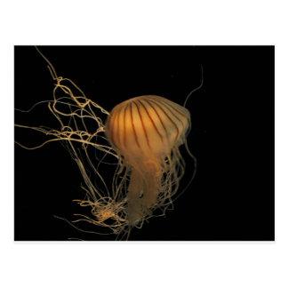 ¡Vals de las medusas Tarjetas Postales