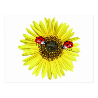 Valxart Happy Lady Bugs on yellow sunflower Postcard