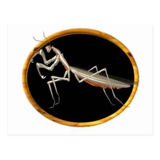 Valxart preying mantis  nature icon postcard