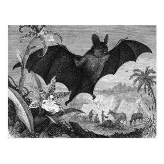 Vampire Bat Postcard