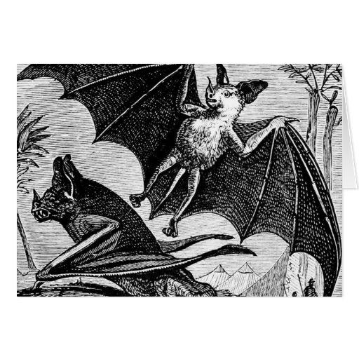 Vampire Bats Cards