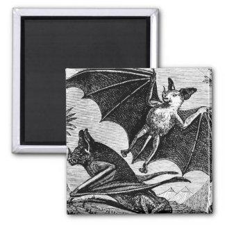 Vampire Bats Magnet