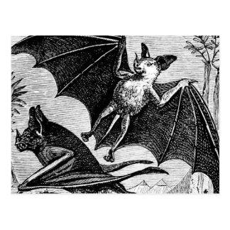 Vampire Bats Postcard