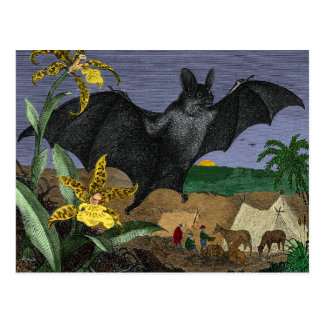 Vampire Big Flying Mouse Postcard
