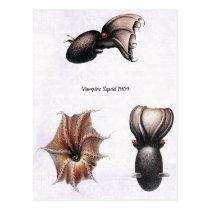 Vampire Squid Postcard