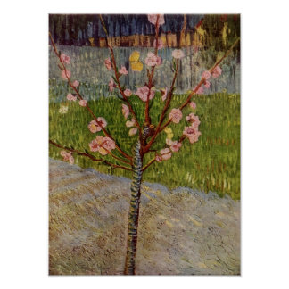 Van Gogh - Almond Tree in Blossom Poster