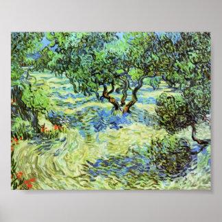 Van Gogh - arboleda verde oliva - cielo azul brill Posters