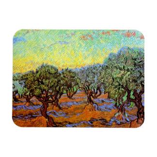 Van Gogh - arboleda verde oliva con el cielo Iman De Vinilo