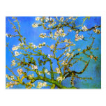 Van Gogh: Blossoming Almond Tree Branches Postcards