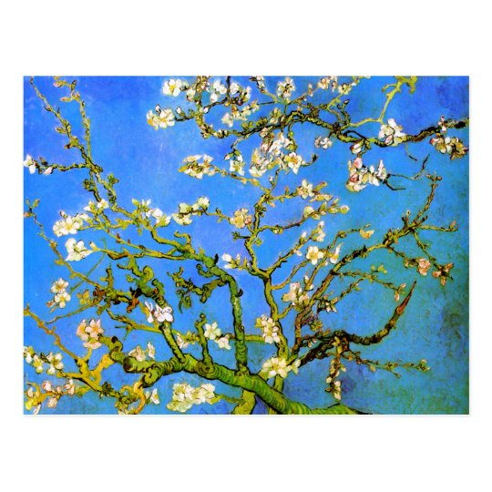 Van Gogh: Blossoming Almond Tree Branches Postcard