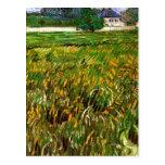 Van Gogh; Campo de trigo en Auvers con Casa Blanca Postales