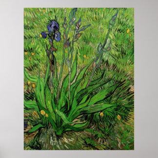 Van Gogh Iris, Vintage Garden Fine Art Flowers Poster