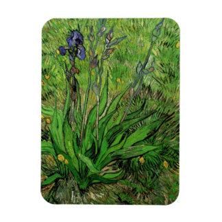 Van Gogh Iris, Vintage Garden Fine Art Flowers Rectangular Photo Magnet