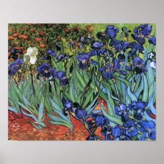 Van Gogh irisa la bella arte del vintage (F608) Impresiones