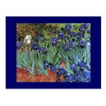 Van Gogh irisa la bella arte del vintage (F608) Tarjeta Postal