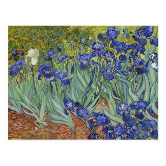 Van Gogh irisa la bella arte del vintage floral Postales