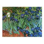 Van Gogh Irises (F608) Vintage Fine Art Post Card