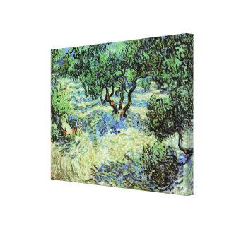 Van Gogh Olive Grove, Vintage Trees Fine Art Canvas Print