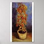 Van Gogh - planta del coleo en una maceta Posters