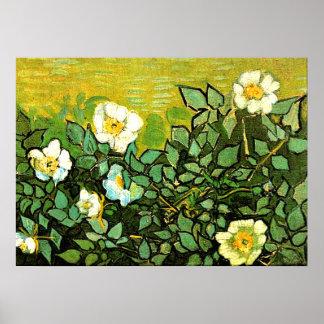 Van Gogh - rosas salvajes, pintura floral de Van Póster
