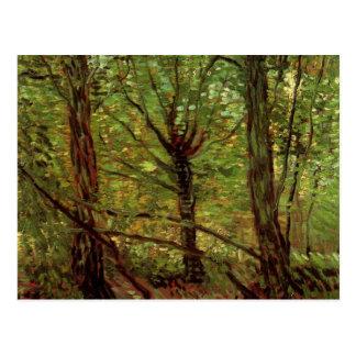 Van Gogh Trees Undergrowth, Vintage Impressionism Postcard