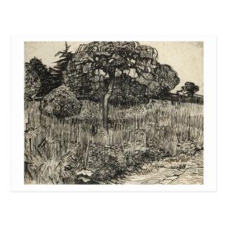 Van Gogh Weeping Tree on a Lawn Postcard
