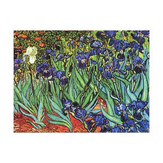 Van Gogh's 'Irises' Canvas Print