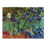 Van Gogh's 'Irises' Postcard