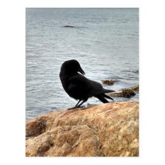 Vancouver Crow Postcard