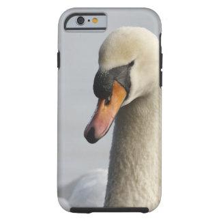 Vancouver, parque de Stanley, cisne mudo (olor del Funda Para iPhone 6 Tough