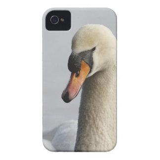 Vancouver, parque de Stanley, cisne mudo (olor del iPhone 4 Fundas