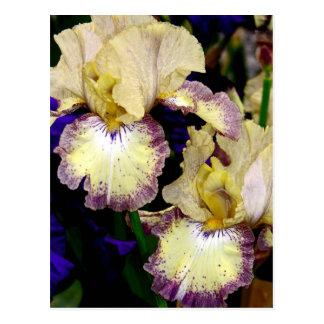 Vanilla Coloured Orchids Postcard