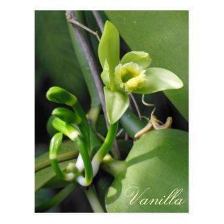 Vanilla Orchid Postcard
