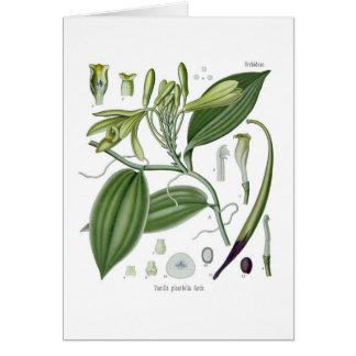 Vanilla planifolia card