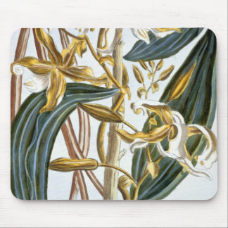 Vanilla pods, plate 65, from 'Collection Precieuse Mouse Pad