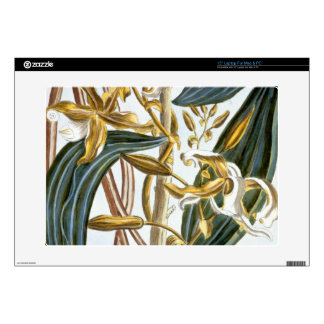 Vanilla pods, plate 65, from 'Collection Precieuse Skin For Laptop