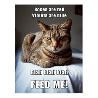 Vanlentine Cat Feed Me poem