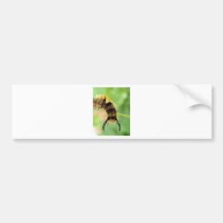 vapourer moth ( caterpillar ) bumper sticker