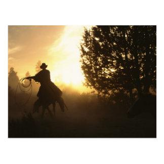 Vaquero con el lazo en puesta del sol postales