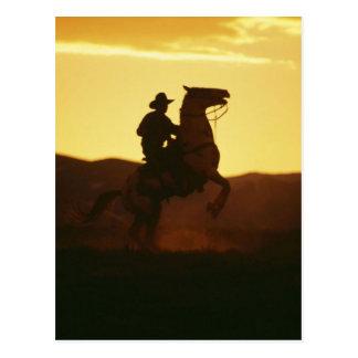 Vaquero en alzar el caballo tarjeta postal