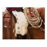 Vaquero en el caballo 2 postal