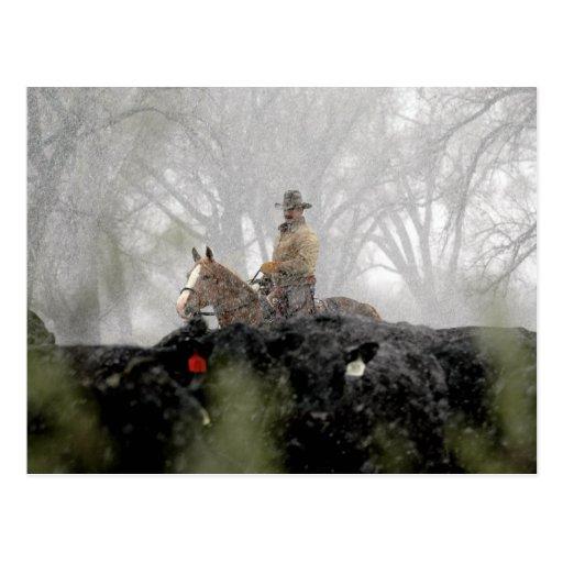 Vaquero en invierno postales