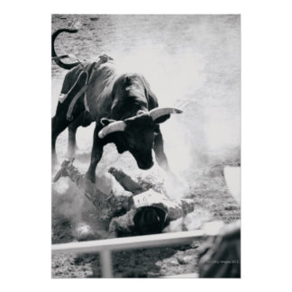 Vaquero en la tierra después de caer apagado toro posters