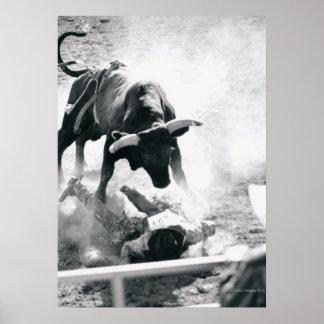Vaquero en la tierra después de caer apagado toro póster