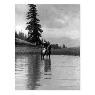 Vaquero en una charca postales