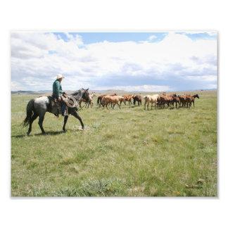 Vaquero que reúne caballos hacia fuera al oeste impresión fotográfica