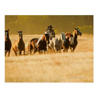 Vaquero que reúne los caballos 2 postal
