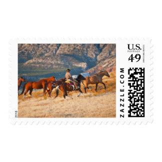 Vaquero que reúne los caballos salvajes 2 estampilla