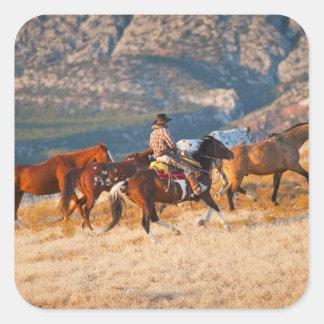 Vaquero que reúne los caballos salvajes 2 pegatina cuadrada