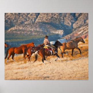 Vaquero que reúne los caballos salvajes 2 póster